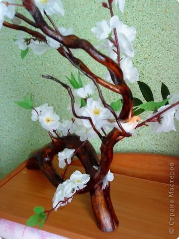 Сакура из коряги фото 4