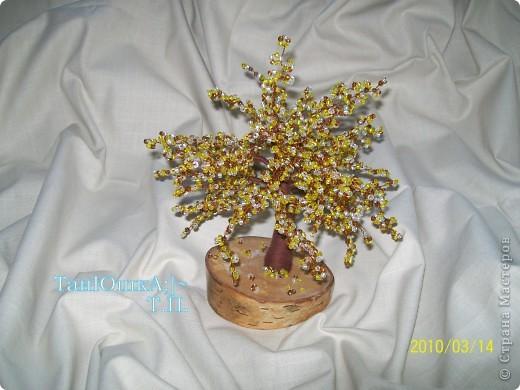 Деревья и Цветы фото 2
