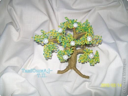 Деревья и Цветы фото 3