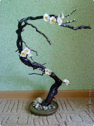 Сакура из коряги фото 7