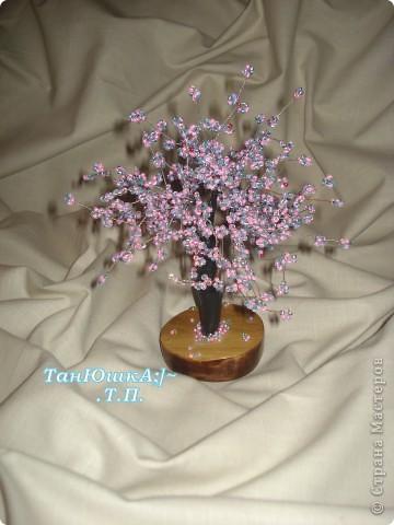Деревья и Цветы фото 7