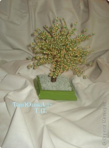 Деревья и Цветы фото 16