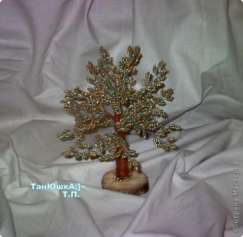 Деревья и Цветы фото 17
