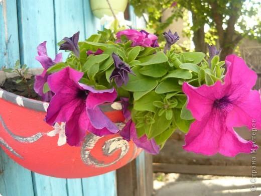Приглашаю вас прогуляться по моему участку. в своем доме мы живем только 6 лет, до этого всю жизнь прожила в квартире. Очень люблю лилии, поэтому и свой цветник начала создавать с посадки именно этих цветов. фото 8