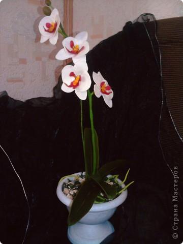 Ну вот теперь и у меня есть своя орхидейка фото 1