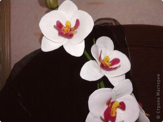 Ну вот теперь и у меня есть своя орхидейка фото 3