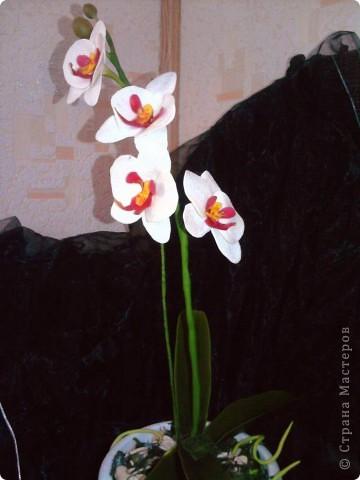 Ну вот теперь и у меня есть своя орхидейка фото 4