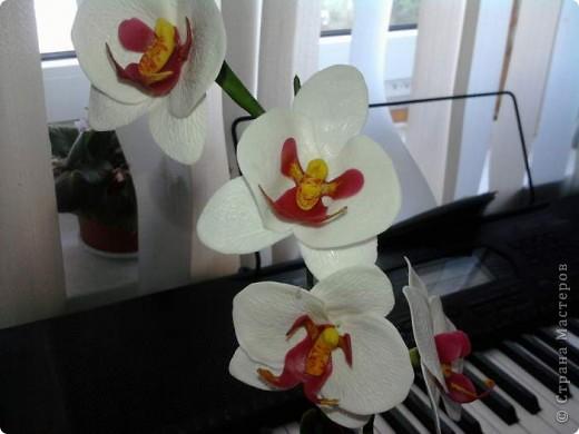 Ну вот теперь и у меня есть своя орхидейка фото 6
