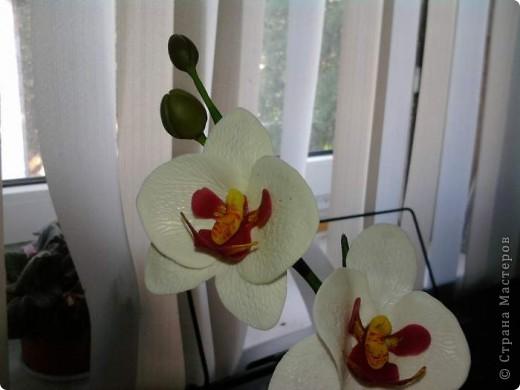 Ну вот теперь и у меня есть своя орхидейка фото 7