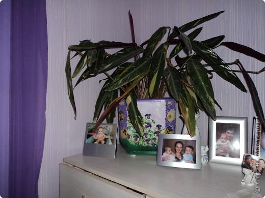 Цветок только пересадила, поэтому он листочками ещё пытается подсмотреть куда его посадили)  фото 1