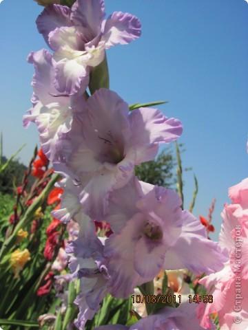 Стали отцветать постепенно лилии фото 26