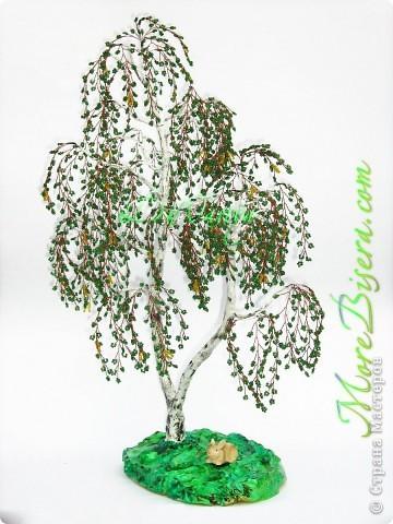 Береза Красавица двуствольная от DiNastya