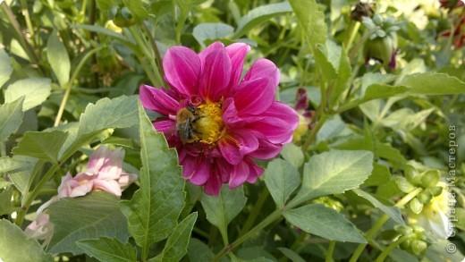 Здравствуйте, уважаемые мастерицы! Решила сделать маленький репортаж на своем участке. Хотелось запечатлить красту лета, ведь, по моему мнению, это самое прекрасное время года. Да здравтвует лето!!!! Это петуния с пчелками из пенопласта. фото 11