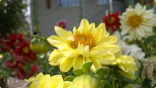 Здравствуйте, уважаемые мастерицы! Решила сделать маленький репортаж на своем участке. Хотелось запечатлить красту лета, ведь, по моему мнению, это самое прекрасное время года. Да здравтвует лето!!!! Это петуния с пчелками из пенопласта. фото 14