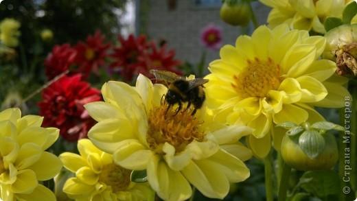Здравствуйте, уважаемые мастерицы! Решила сделать маленький репортаж на своем участке. Хотелось запечатлить красту лета, ведь, по моему мнению, это самое прекрасное время года. Да здравтвует лето!!!! Это петуния с пчелками из пенопласта. фото 13