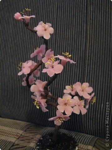 Наипервейшая моя сакура. Очень нравилась, но теперь кажется, что у веточек изгиб какой то неизящный. фото 3