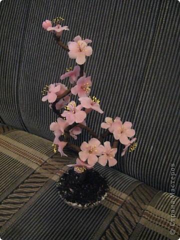 Наипервейшая моя сакура. Очень нравилась, но теперь кажется, что у веточек изгиб какой то неизящный. фото 4