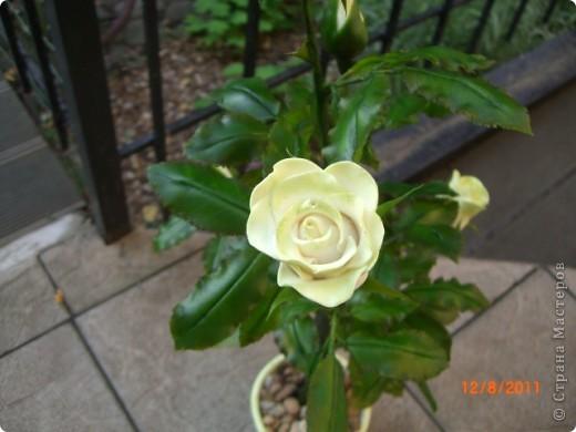 Вот решила замахнуться на розу.Цветок получился 60 см. фото 3
