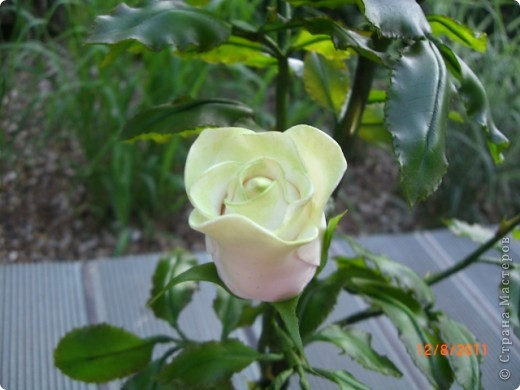 Вот решила замахнуться на розу.Цветок получился 60 см. фото 11