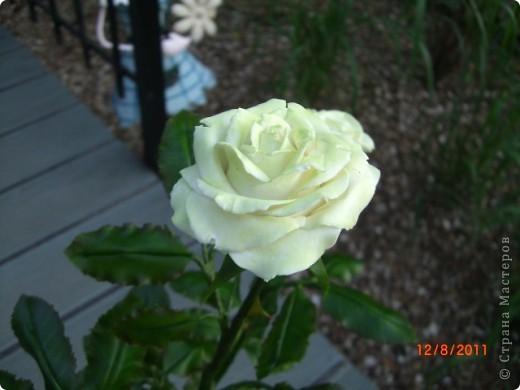 Вот решила замахнуться на розу.Цветок получился 60 см. фото 12