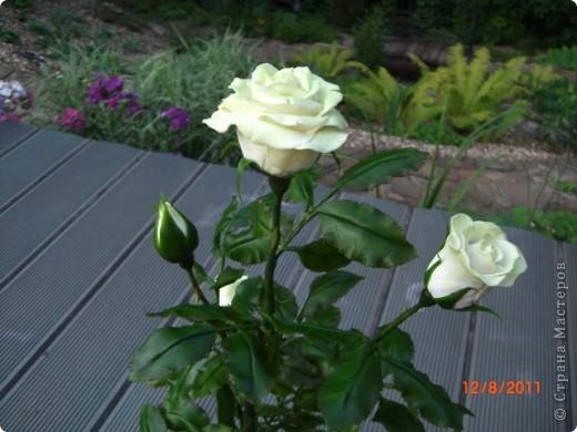 Вот решила замахнуться на розу.Цветок получился 60 см. фото 2