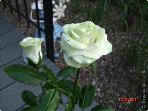 Вот решила замахнуться на розу.Цветок получился 60 см. фото 14