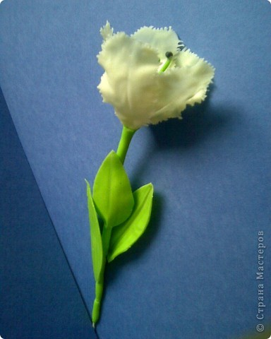 махровый тюльпан фото 1