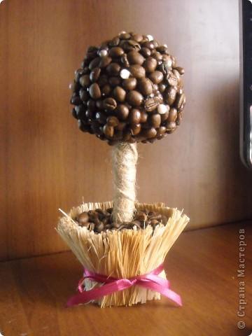 """Мое """"кофейное дерево"""",нашла его в стране маетеров... фото 1"""