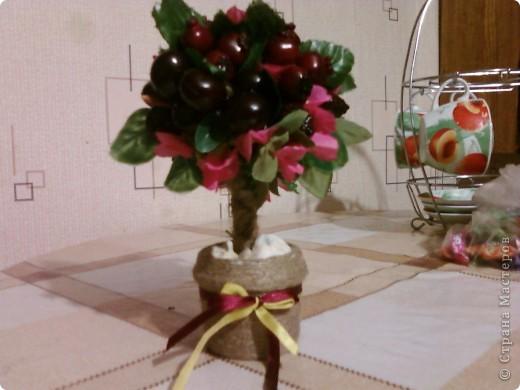 """Мое """"кофейное дерево"""",нашла его в стране маетеров... фото 2"""
