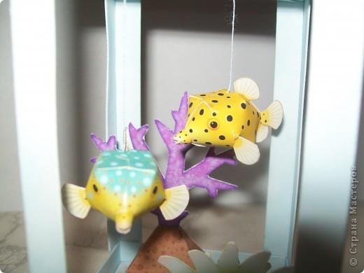 аквариум фото 2