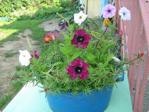 Август дышит теплом и дарит нам цветочное разноцветье! фото 8