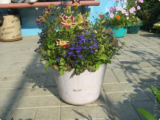 Август дышит теплом и дарит нам цветочное разноцветье! фото 4