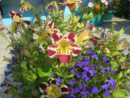 Август дышит теплом и дарит нам цветочное разноцветье! фото 5