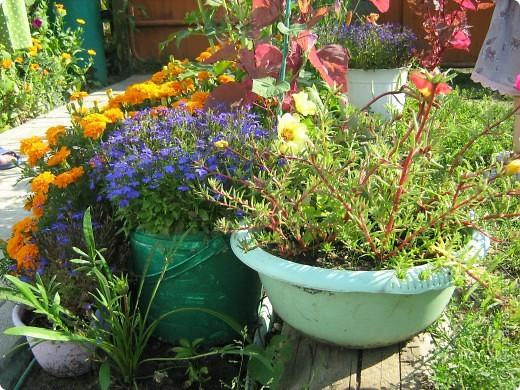 Август дышит теплом и дарит нам цветочное разноцветье! фото 1