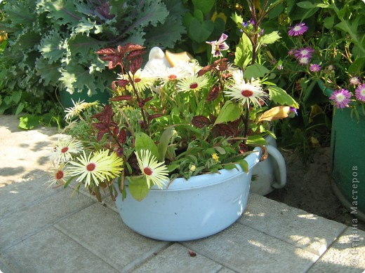 Август дышит теплом и дарит нам цветочное разноцветье! фото 2