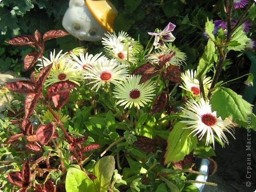 Август дышит теплом и дарит нам цветочное разноцветье! фото 3