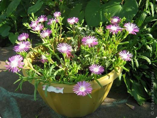 Август дышит теплом и дарит нам цветочное разноцветье! фото 6