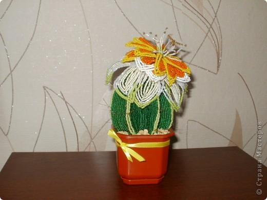 вечноцветущий кактус  фото 1
