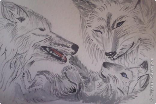 Волки фото 2