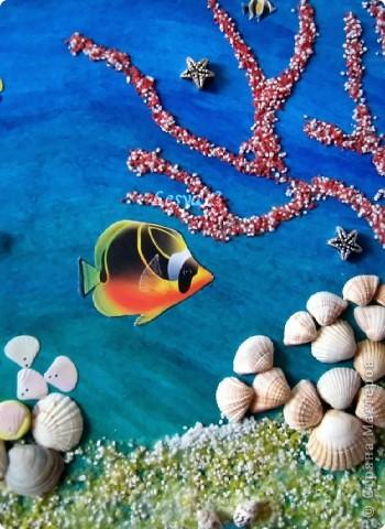 Коралловый риф фото 2