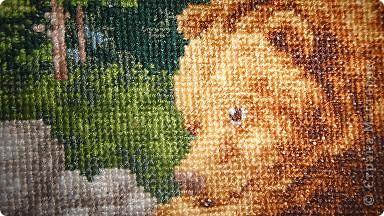 медведи, набор Золотое руно, размер 27х35, 37 цветов, 16 канва  фото 3