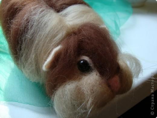 Как и любая свинка Жорик любит капусту. фото 2
