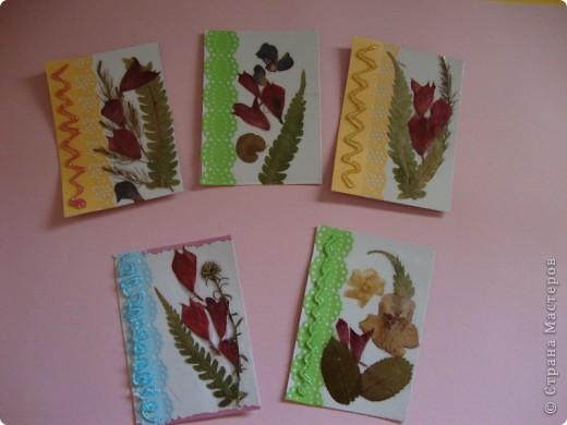 В прошлом году хотела попробовать сушить цветы, вот и  сделала из этого материала  карточки. Для пробы. Сделала  карточки на белом фоне, хотела чтобы были видны  цветы и листочки, а не фон. фото 2