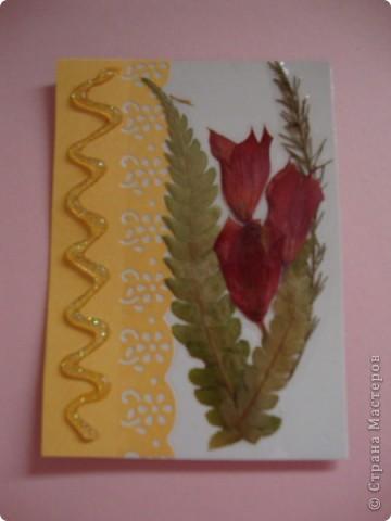 В прошлом году хотела попробовать сушить цветы, вот и  сделала из этого материала  карточки. Для пробы. Сделала  карточки на белом фоне, хотела чтобы были видны  цветы и листочки, а не фон. фото 3