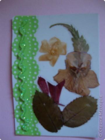 В прошлом году хотела попробовать сушить цветы, вот и  сделала из этого материала  карточки. Для пробы. Сделала  карточки на белом фоне, хотела чтобы были видны  цветы и листочки, а не фон. фото 4