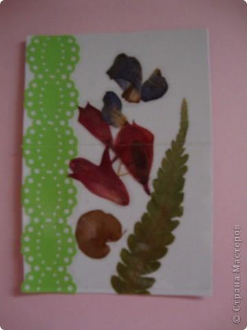 В прошлом году хотела попробовать сушить цветы, вот и  сделала из этого материала  карточки. Для пробы. Сделала  карточки на белом фоне, хотела чтобы были видны  цветы и листочки, а не фон. фото 6