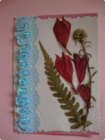 В прошлом году хотела попробовать сушить цветы, вот и  сделала из этого материала  карточки. Для пробы. Сделала  карточки на белом фоне, хотела чтобы были видны  цветы и листочки, а не фон. фото 5