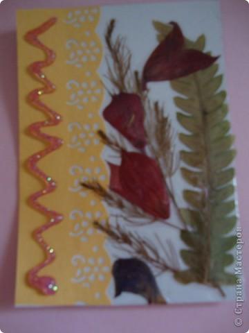 В прошлом году хотела попробовать сушить цветы, вот и  сделала из этого материала  карточки. Для пробы. Сделала  карточки на белом фоне, хотела чтобы были видны  цветы и листочки, а не фон. фото 7