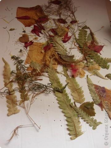 В прошлом году хотела попробовать сушить цветы, вот и  сделала из этого материала  карточки. Для пробы. Сделала  карточки на белом фоне, хотела чтобы были видны  цветы и листочки, а не фон. фото 1