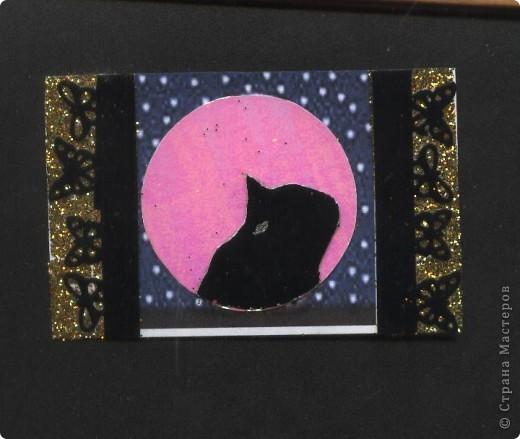 """Кошки под луной. Вы скажете """"РОЗОВАЯ""""?!? Нет, всё зависит от освещения. А вообще-то лимонно-жёлтая!!! фото 2"""